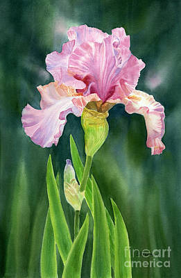 Garden Painting - Pink Iris With Dark Background  by Sharon Freeman
