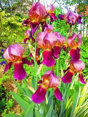 Photograph - Pink Irises by Vesna Martinjak