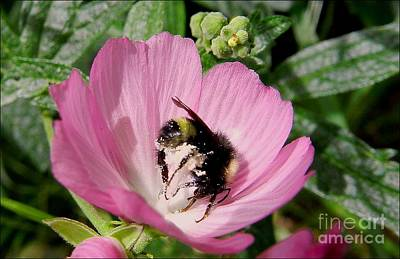 Photograph - Pink Is For Bees by Julia Hassett