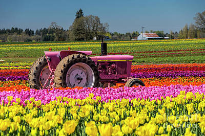 Photograph - Pink John Deere Tulips by Louise Magno