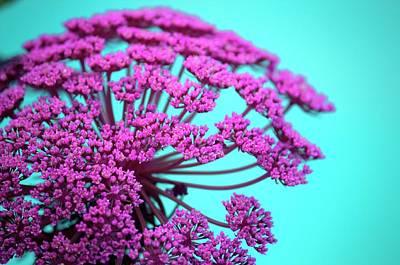 Pink Lace 02 Art Print