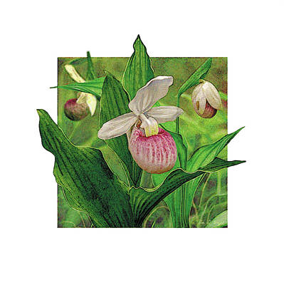 Pink Lady Slipper Art Print by JQ Licensing