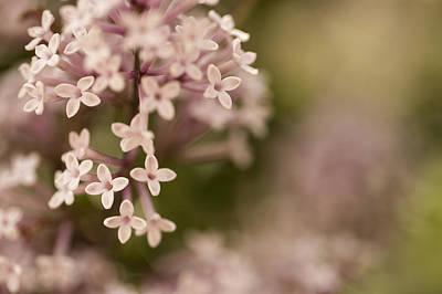 Pink Lilacs Art Print by Liz Howerton