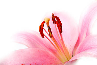 Floral Wall Art - Photograph - Pink Lilies 08 by Nailia Schwarz