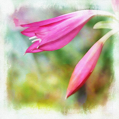 Photograph - Pink Lilies by Judi Bagwell