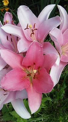 Painting - Pink Lillies 1 by Vickie G Buccini