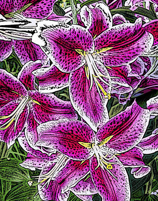 Pink Lillies Art Print