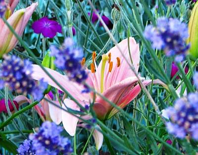 Photograph - Pink Lily In The Lavender by Judyann Matthews