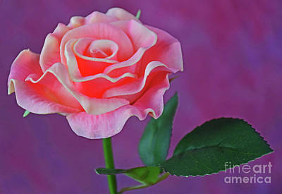 Photograph - Pink Lovely by Ray Shrewsberry