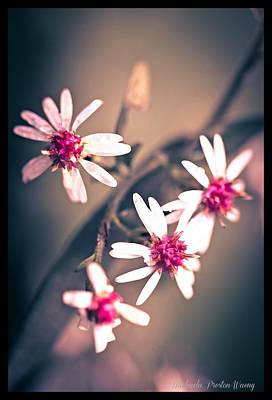 Photograph - Pink by Michaela Preston