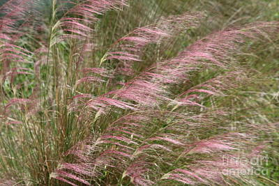Photograph - Pink Muhly Grass On The Beach by Carol Groenen