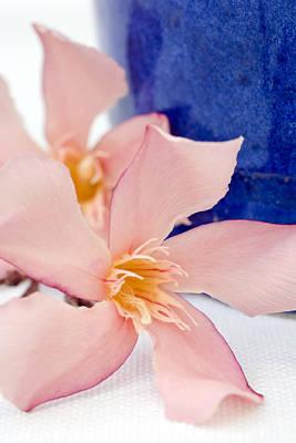 Pink Oleander Flowers Print by Frank Tschakert
