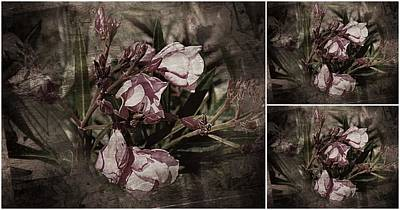 Photograph - Vintage Victorian Oleander Collage by Dorothy Berry-Lound