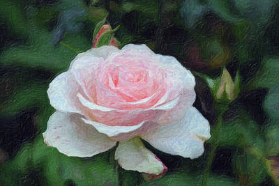 Mixed Media - Pink On Pink Rose  by Don Wright
