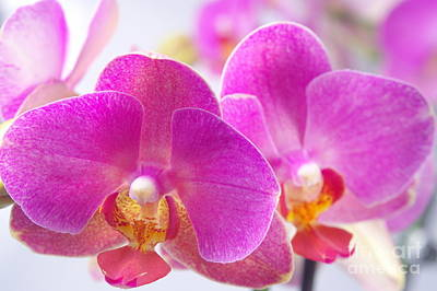 Art Print featuring the photograph Pink Orchid by Dariusz Gudowicz