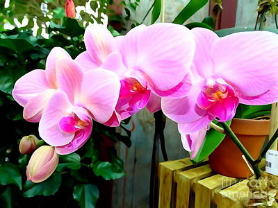 Photograph - Pink Orchid by Ed Weidman