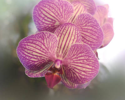 Photograph - Pink Orchid - Flowers- Photograph by Ann Powell