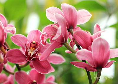Photograph - Pink Orchid II by Angela Rath