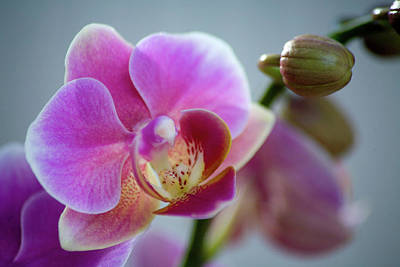 Photograph - Pink Orchid by James Jones