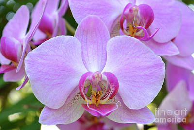 Wall Art - Photograph - Pink Orchid by Josie Elias