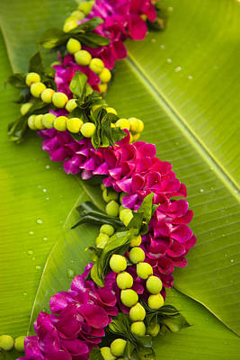 Photograph - Pink Orchid Lei by Dana Edmunds - Printscapes