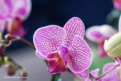 Photograph - Pink Orchid by Nance Larson