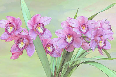 Photograph - Pink Orchid Photo Sketch by Patti Deters