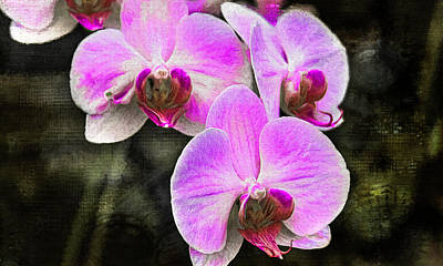 Photograph -  Pink Orchid by Reynaldo Williams