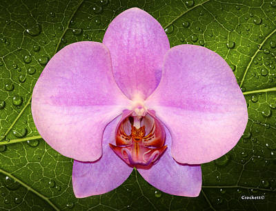 Photograph - Pink Orchid Single by Gary Crockett