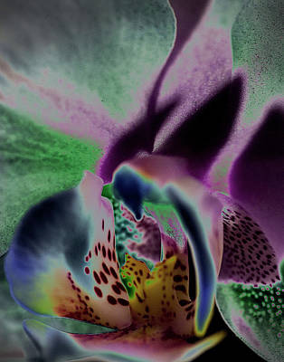 Photograph - Pink Orchid - Twisted by Susan Garrett