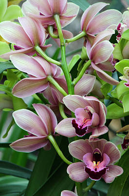Photograph - Pink Orchids 2 by Ann Bridges