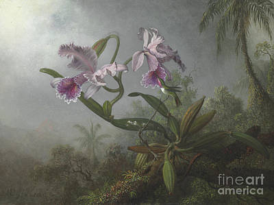 Hummingbird Painting - Pink Orchids And Hummingbird On A Twig, 1875 by Martin Johnson Heade