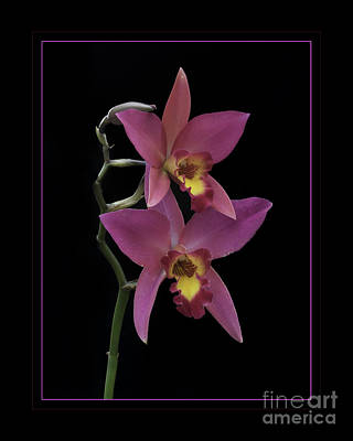 Photograph - Pink Orchids by Darleen Stry