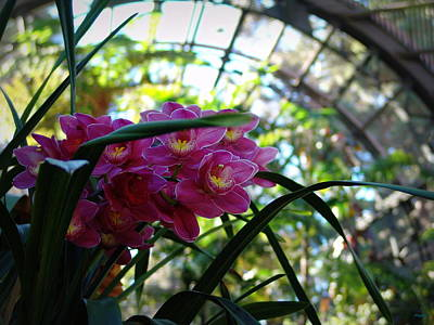 Installation Art Photograph - Pink Orchids by Glenn McCarthy Art and Photography