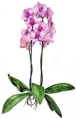 Art Print featuring the painting Pink Orchids by Heidi Kriel