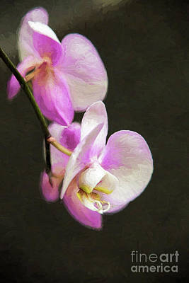 Digital Art - Pink Orchids On Black by Sharon McConnell