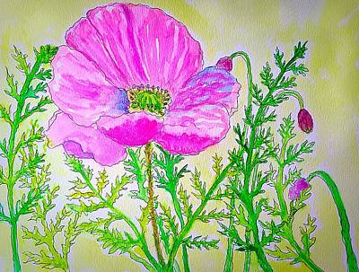 Painting - Pink Oriental Poppy by Anne Sands