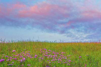 Andscape Photograph - Pink  Over Pink  by Marc Crumpler