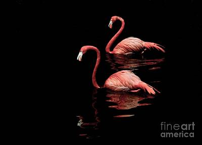 Tickled Pink Photograph - Pink Pair by Lisa Renee Ludlum