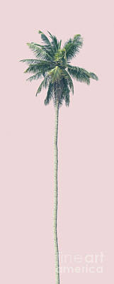 Photograph - Pink Palm by Andrew Paranavitana