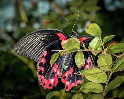 Photograph - Pink Panther by Robert Culver