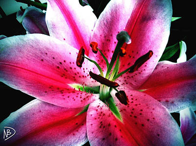 Photograph - Pink Passion by Nicole Dumond-Barry