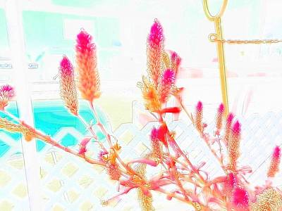 Photograph - Pink Pastel Celosia by Belinda Lee
