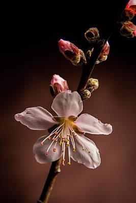 Pink Peach Blooms 5510.02 Art Print by M K  Miller