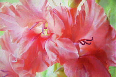 Photograph - Pink Peach Gladiolus  by Jenny Rainbow