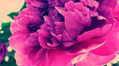 Pink Peonie Art Print