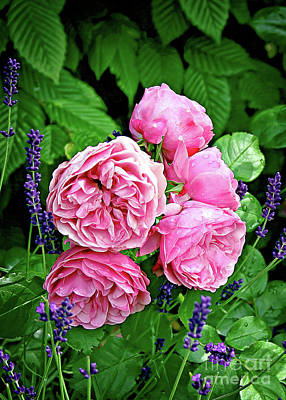 Photograph - Pink Peonies And Lavender by Gabriele Pomykaj