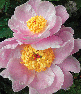 Art Print featuring the photograph Pink Peonies by David Klaboe