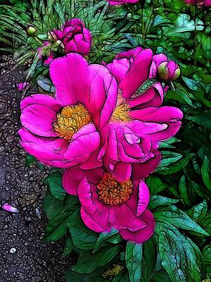 Photograph - Pink Peonies by Nick Heap