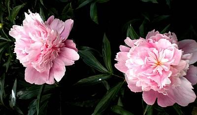 Painting - Pink Peonies by Renate Nadi Wesley